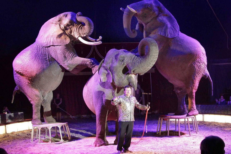 circus afrika