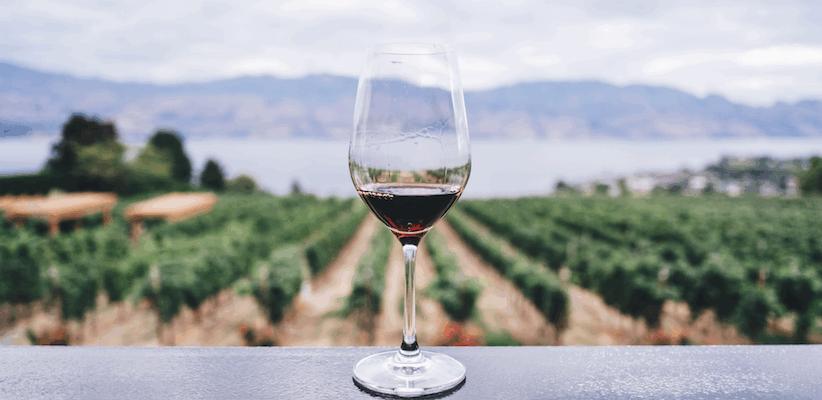 Weinführung Meißen